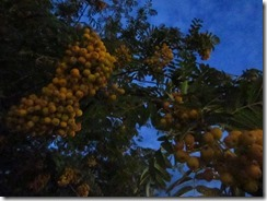 'TWILIGHT BERRIES' by Errol Lee Shepherd_0022