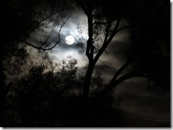 'FULL MOON THROUGH BRANCH', by Errol Lee Shepherd_IMG_0110