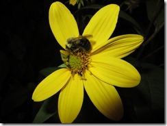 'The SLEEPING BEE', by Errol Lee Shepherd_IMG_0155