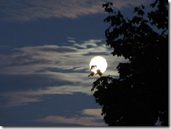 'FULL MOON-2', by Errol Lee Shepherd_IMG_0005