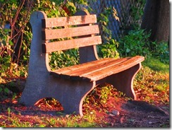 'SUNNY BENCH-1', by Errol Lee Shepherd_IMG_0003