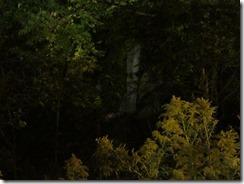 'WHITE TREE', by Errol Lee Shepherd_IMG_0008