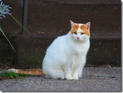 'FIRST CAT', by Errol Lee Shepherd_2015_09_30_IMG_0026