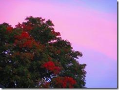 'RED TREE PINKandBLUE', by Errol Lee Shepherd_2015_09_30_IMG_0073