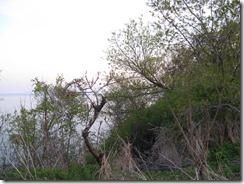 'DOG WENT DOWN HERE', by Errol Lee Shepherd_May-12-2009_IMG_7071